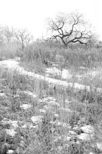 Gloomy Winter Landscape